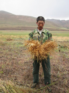 Harsh conditions on the border to Inner Mongolia (farmers shows flax produced)